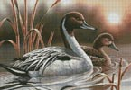 Pintails - Cross Stitch Chart