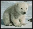 Polar Bear Cub - Cross Stitch Chart