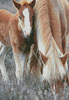 Pony and Foal - Cross Stitch Chart