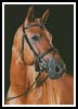 Portrait of a Brown Horse - Cross Stitch Chart