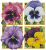 Pretty Pansies (Crop) - Cross Stitch Chart