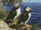 Puffin Couple - Cross Stitch Chart