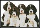 Puppies 2 - Cross Stitch Chart