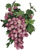 Purple Grapes - Cross Stitch Chart