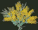 Queensland Silver Wattle - Cross Stitch Chart