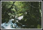 Rainforest 1 - Cross Stitch Chart