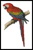 Red and Blue Macaw - Cross Stitch Chart