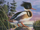 Red-Breasted Merganser - Cross Stitch Chart