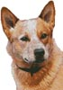Red Heeler - Cross Stitch Chart