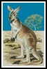 Red Kangaroo - Cross Stitch Chart
