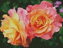 Roses in a Garden - Cross Stitch Chart