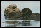 Sea Otter - Cross Stitch Chart