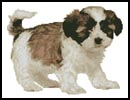Shih Tzu Puppy - Cross Stitch Chart