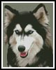 Siberian Husky - Cross Stitch Chart