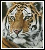 Siberian Tiger - Cross Stitch Chart
