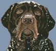 Snow Dog - Cross Stitch Chart
