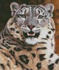 Snow Leopard Close Up (Large) - Cross Stitch Chart