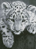 Snow Leopard Cub - Cross Stitch Chart