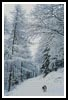 Snowy Walk - Cross Stitch Chart