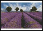 Spring Landscape - Cross Stitch Chart