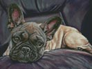 Stella - Cross Stitch Chart