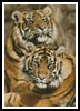 Sumatran Tigers - Cross Stitch Chart