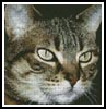 Tabby Cat - Cross Stitch Chart