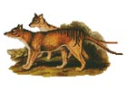 Tasmanian Tiger - Cross Stitch Chart