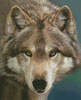 The Eyes of a Hunter - Cross Stitch Chart
