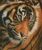 Tiger Face Portrait - Cross Stitch Chart