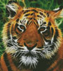 Tiger Fractal - (Facebook Group) Cross Stitch Chart