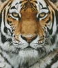 Tiger Portrait - Cross Stitch Chart