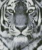 Tiger Portrait (Black and White) - Cross Stitch Chart