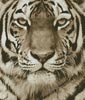 Tiger Portrait (Sepia) - Cross Stitch Chart