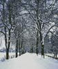 Tree Lined Road in Winter - Cross Stitch Chart