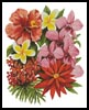 Tropical Flowers of Oz - Cross Stitch Chart