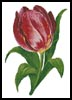 Tulip - Cross Stitch Chart