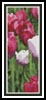 Tulips photo Bookmark - Cross Stitch Chart