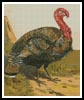 Turkey 2 - Cross Stitch Chart