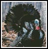 Turkey 3 - Cross Stitch Chart