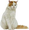 Turkish Van - Cross Stitch Chart