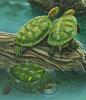 Turtle Pond (Crop) - Cross Stitch Chart