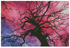Twilight Tree - Cross Stitch Chart