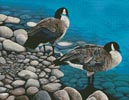 Two Canadian Geese - Cross Stitch Chart