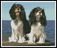 Two Cavalier King Charles - Cross Stitch Chart