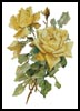 Victorian Yellow Roses - Cross Stitch Chart