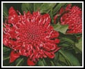 Waratah - Cross Stitch Chart