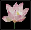 Water Lily - Cross Stitch Chart