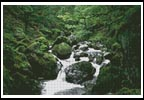 Waterscene 4 - Cross Stitch Chart