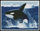 Whale 1 - Cross Stitch Chart